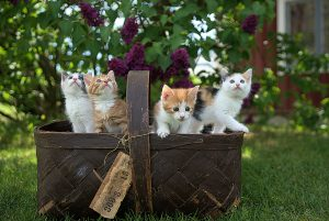 can kittens leave mom at 7 weeks
