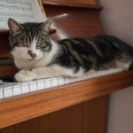 Do Cats Like Piano Music? (And Why Or Why Not!)