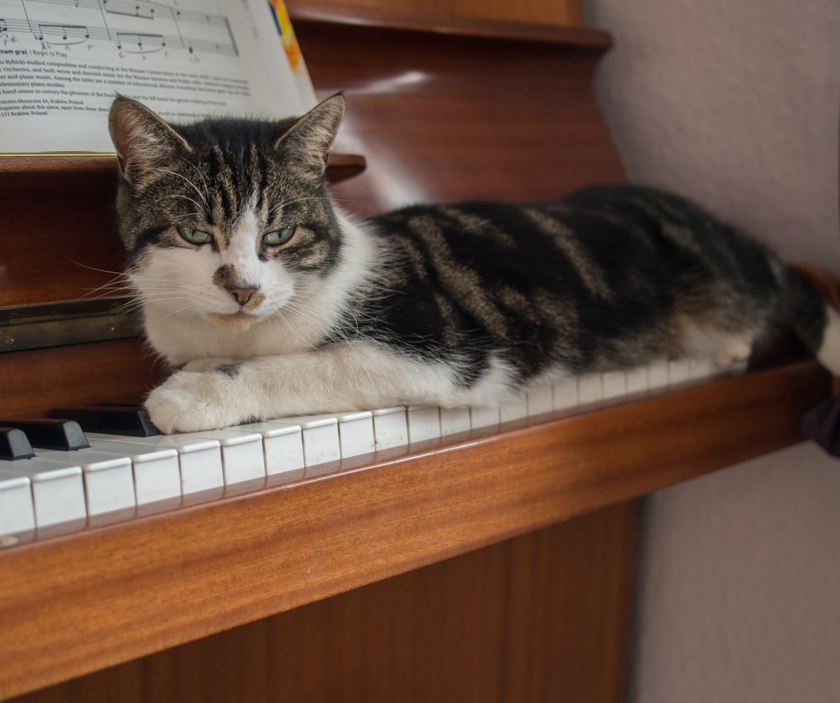do cats like piano music
