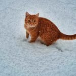 Do Kittens Get Cold? (And How To Keep Them Warm!)