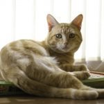 Do Cats Eat Mice Whole? (And Why!)