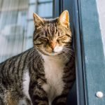 How Do Female Cats Act After Mating? (And Why!)