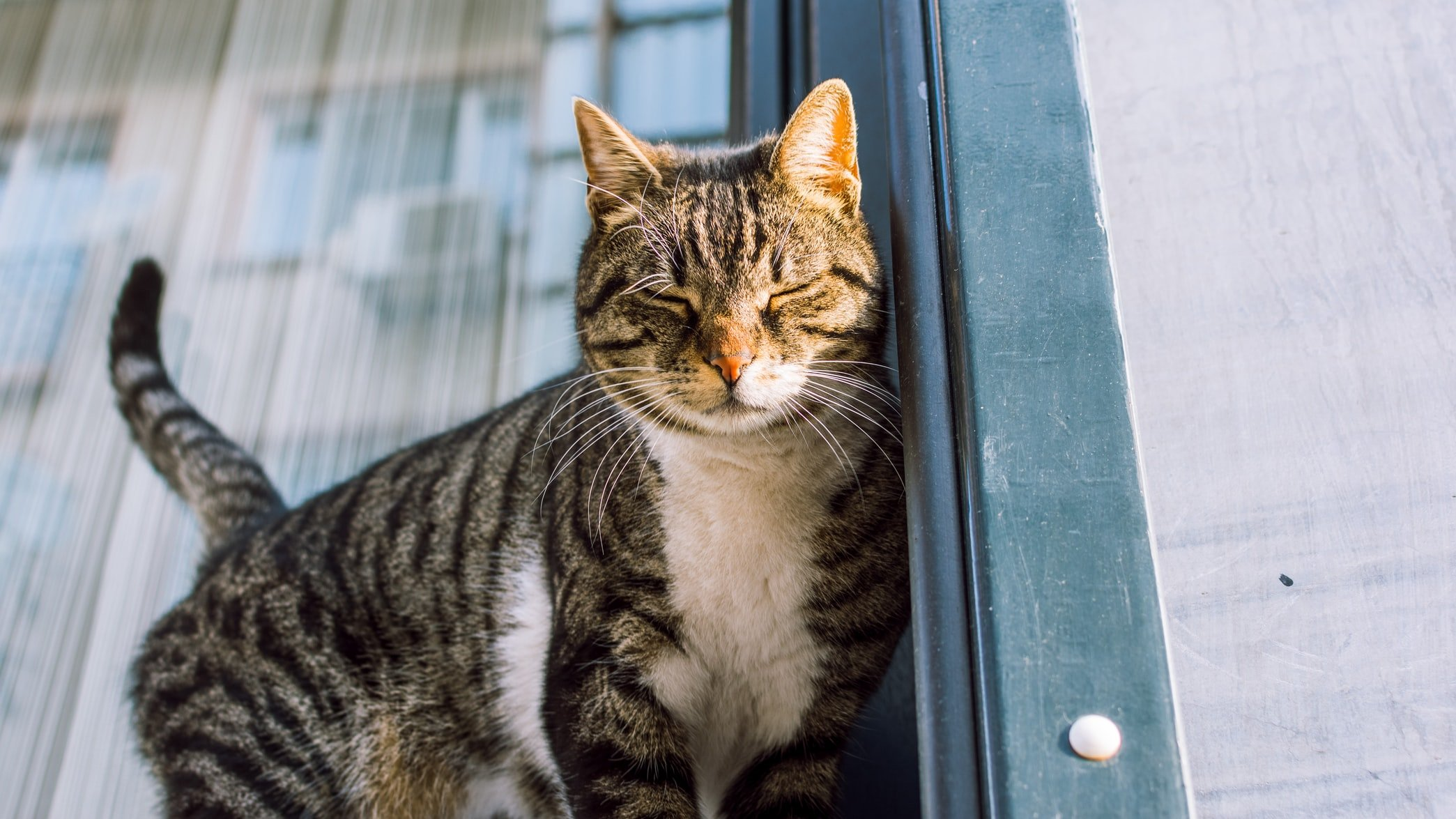 how do female cats act after mating