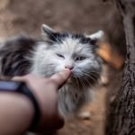 Why Does My Cat Meow When I Pick Her Up? (Explained)