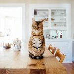 What Does Dream About Cats In House Mean? (Explained)