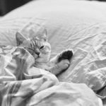 Why Does My Cat Sleep Between Me And My Husband? (Explained)
