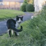 Why Do Cats Like Their Tail Pulled? (Explained)