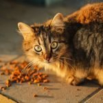 Why Does Cat Food Smell So Bad? (Explained)