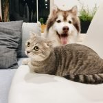 Are Cats Stronger Than Dogs? (Solved)