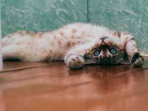 how long do cats play with mice before killing them