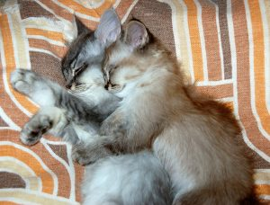 can kittens in the same litter be different ages