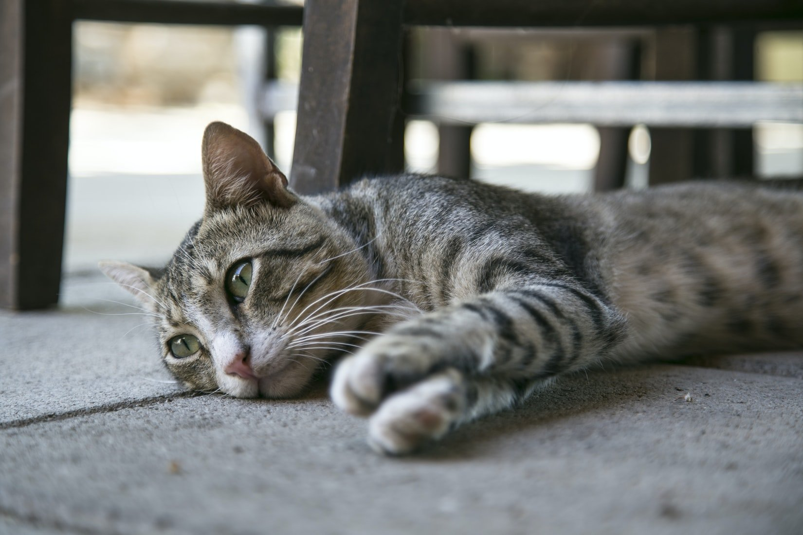 do cats get depressed after abortion