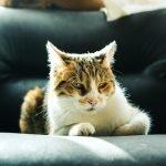 How Far Do Neutered Cats Roam? (Explained)