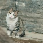 Should I Get Another Cat For My Grieving Cat? (Helpful Tips)