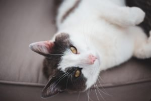 can a cat die from eating a poisoned rat