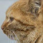 How To Tell If Cat Still Has Kittens Inside? (Explained)