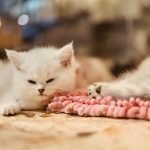 My Cat Keeps Laying On Her Kittens! (Helpful Tips)