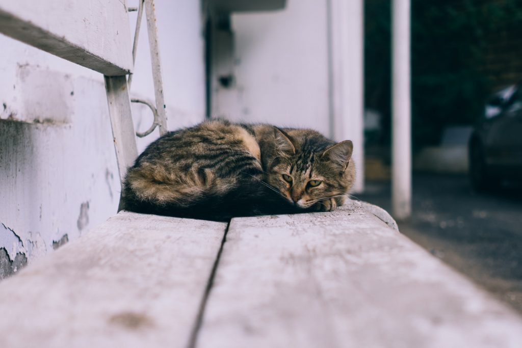 where do stray cats go during the day
