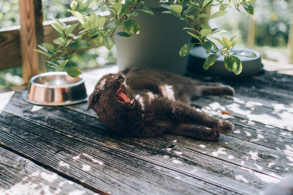 how to train an outdoor cat to stay home