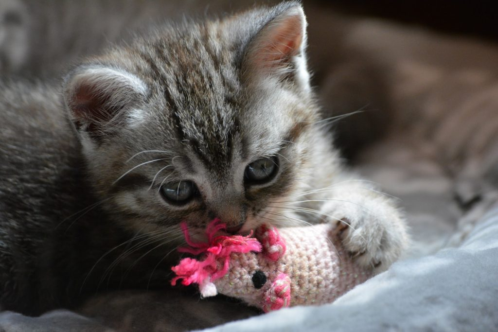 do kittens know when to stop eating