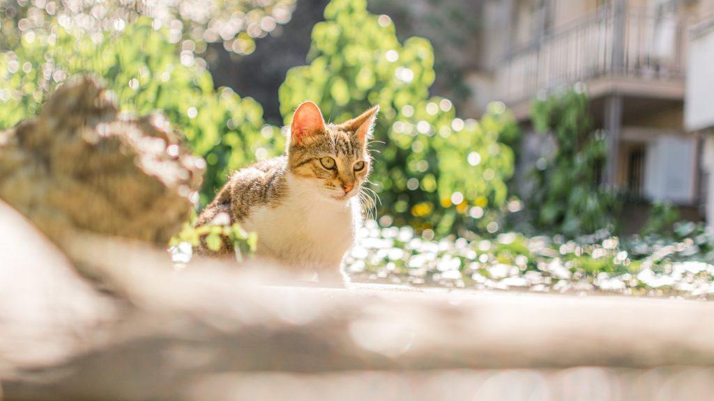 how high can a kitten jump