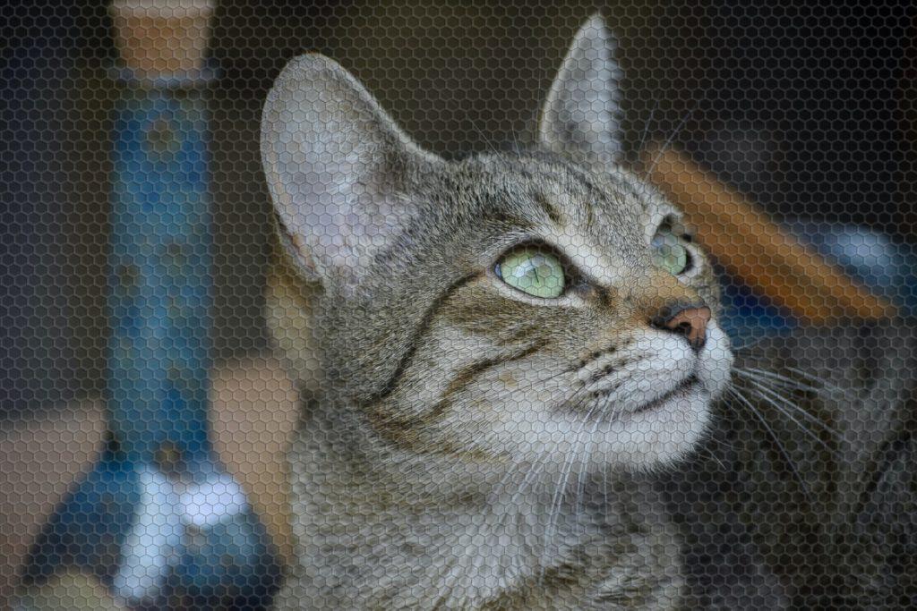 can cats sense snakes
