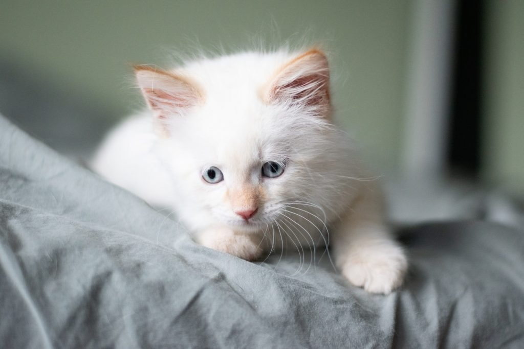 why are some cats fur softer than others