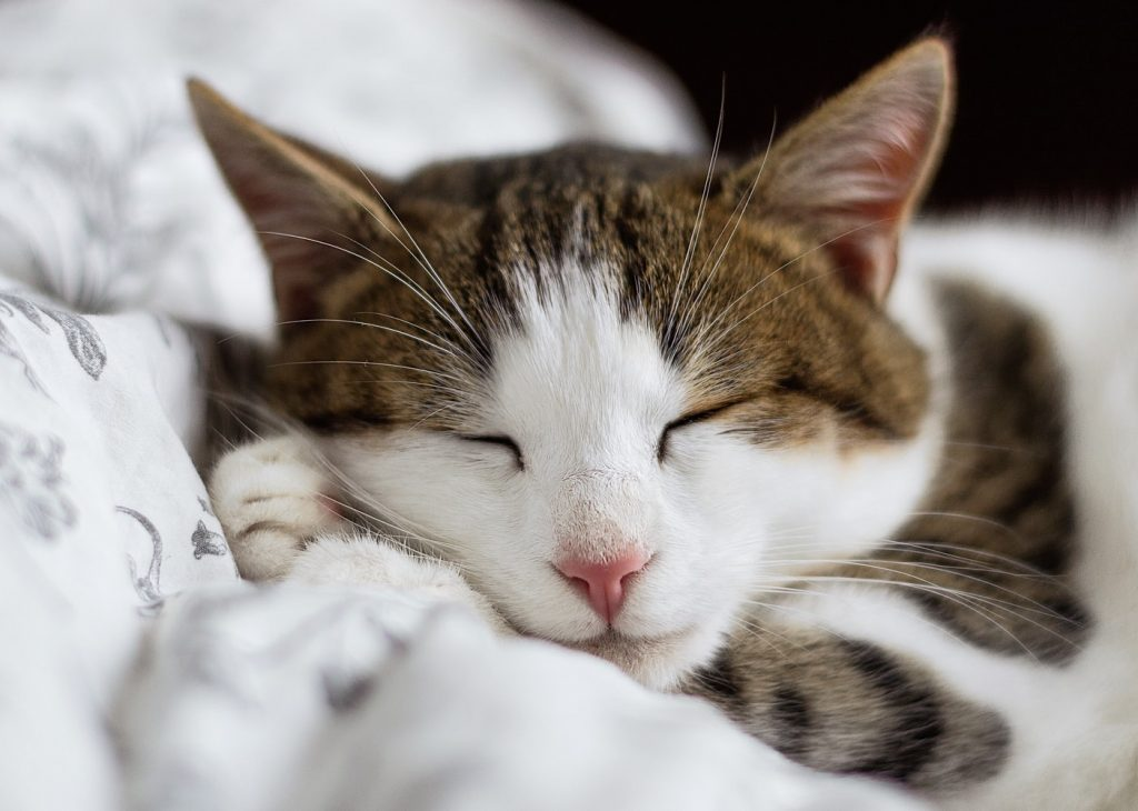 why do cats clean themselves before they sleep