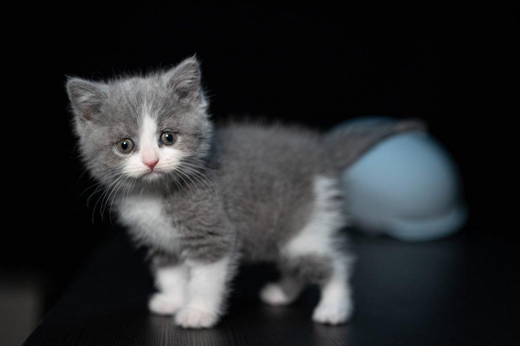 how often should a 4 week old kitten poop