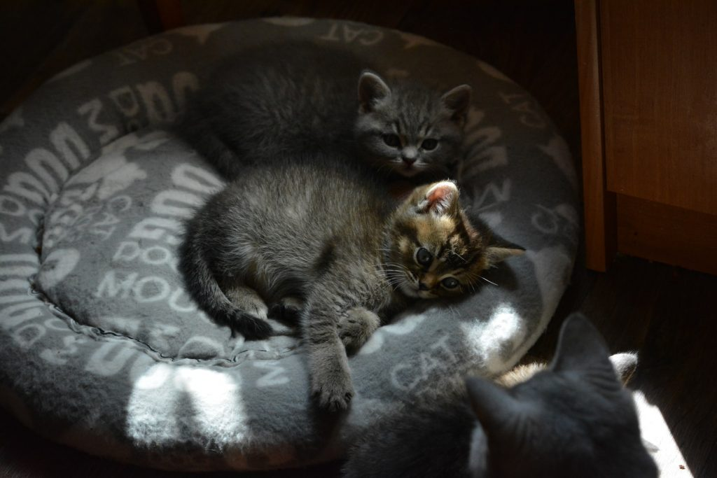 Do kittens look like their parents