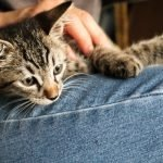 Why Does My Cat Like To Be Held? (Explained and Answered)