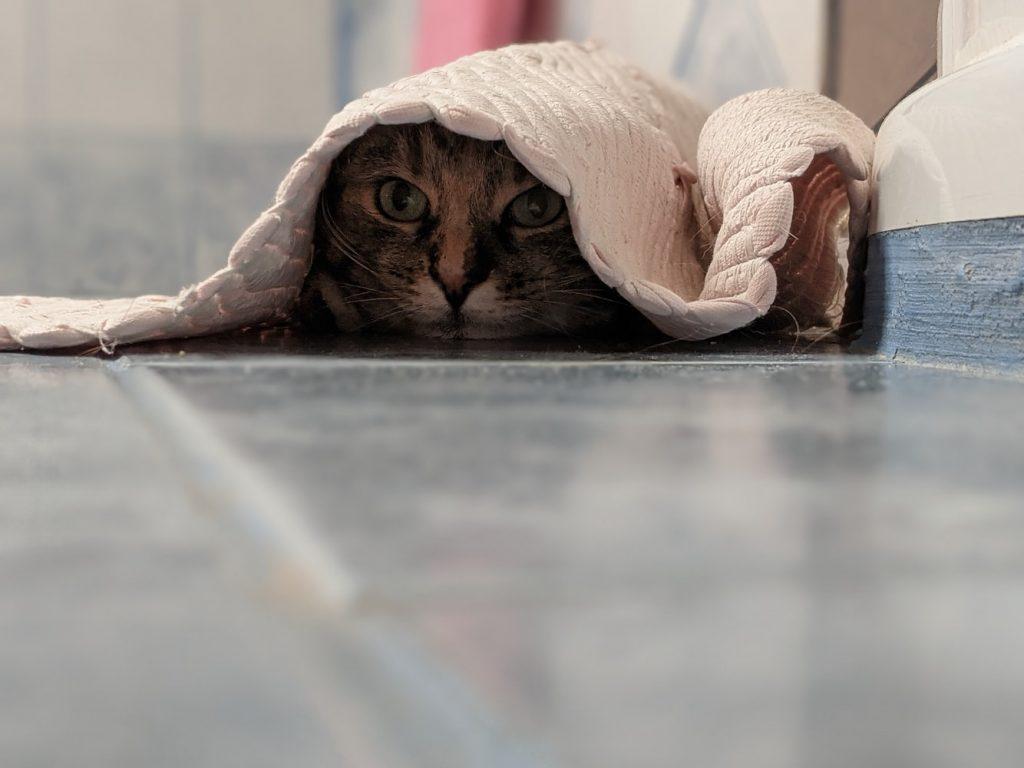 locking cat in bathroom at night