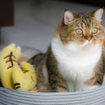 How To Keep Slugs Away From Cat Food! (Helpful Tips)