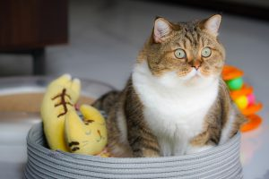how to keep slugs away from cat food