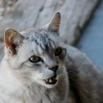 My Cat Hissed At Me For The First Time! (Explained)