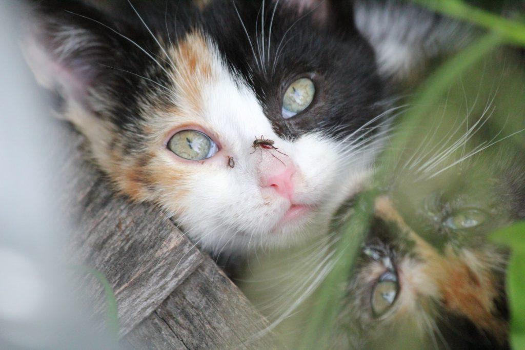 will moth balls keep cats away