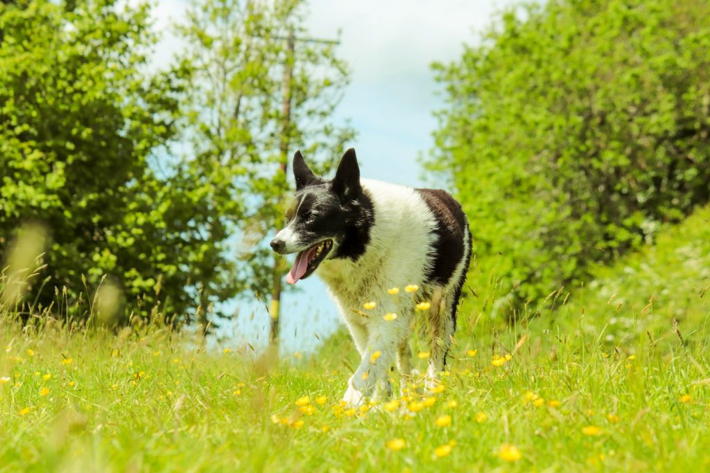 how do you unclog a dog's nose?
