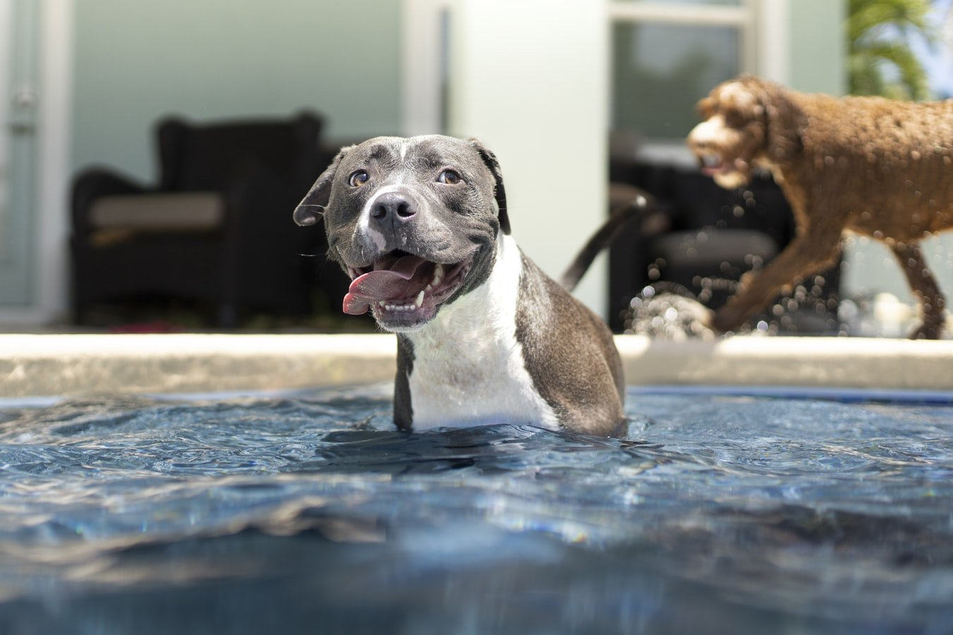 how long should dog swim for a good workout