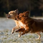 I Hate Having Two Dogs! (Helpful Tips!)