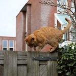 Can A Cat Kill A Hawk? (Solved)