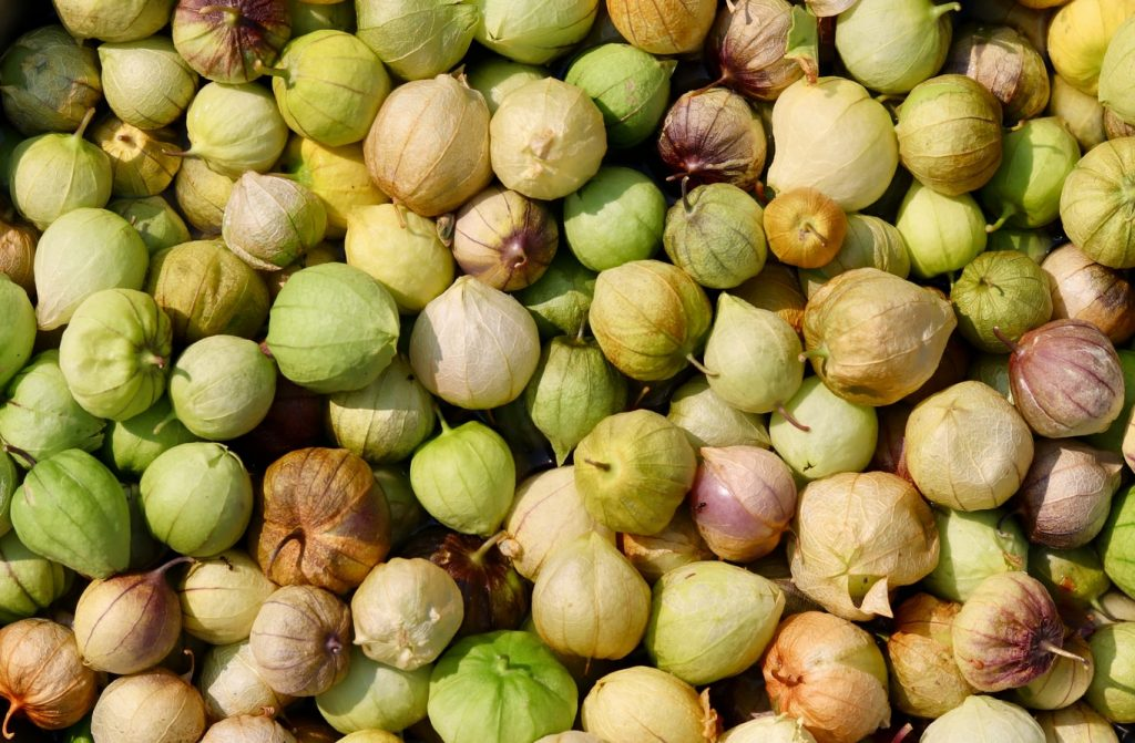 can dogs eat tomatillos
