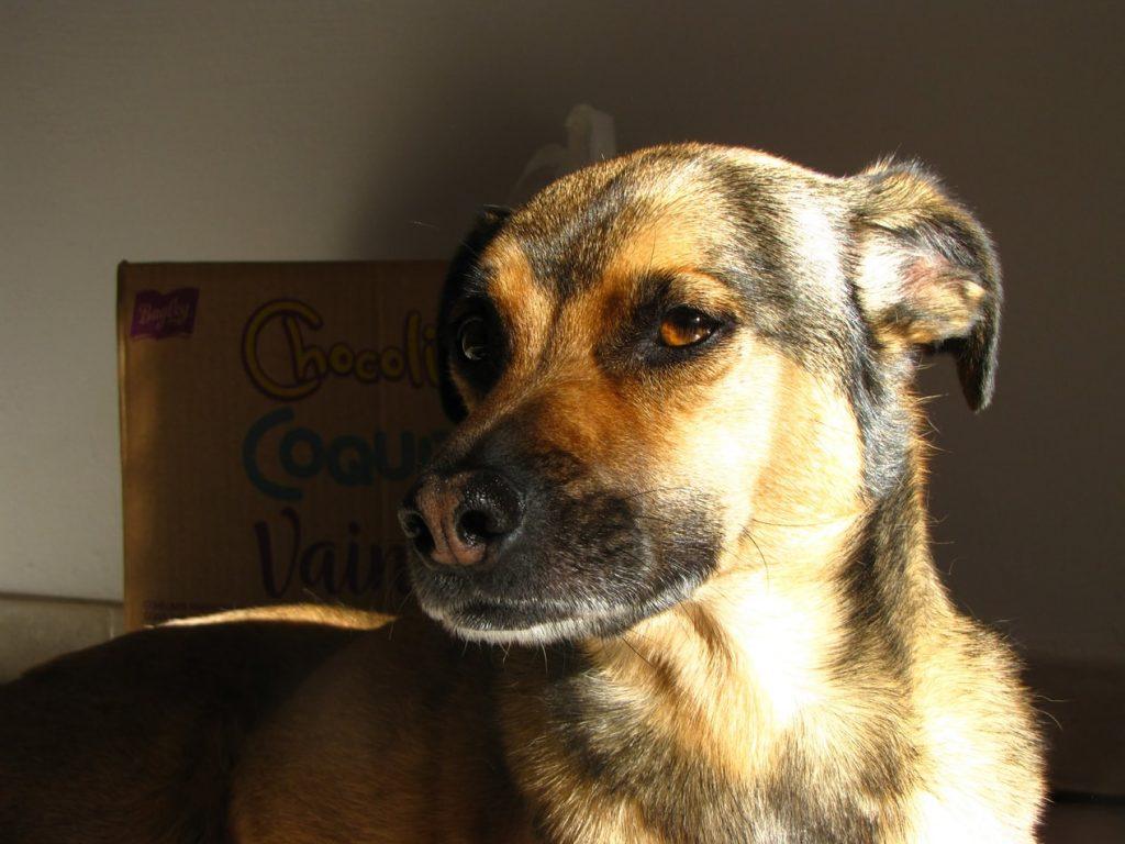 can dogs eat cassava flour