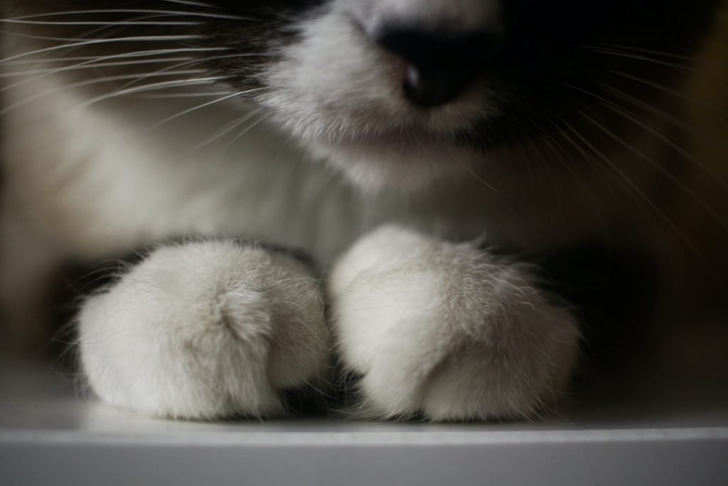 why do cats not like their paws touched