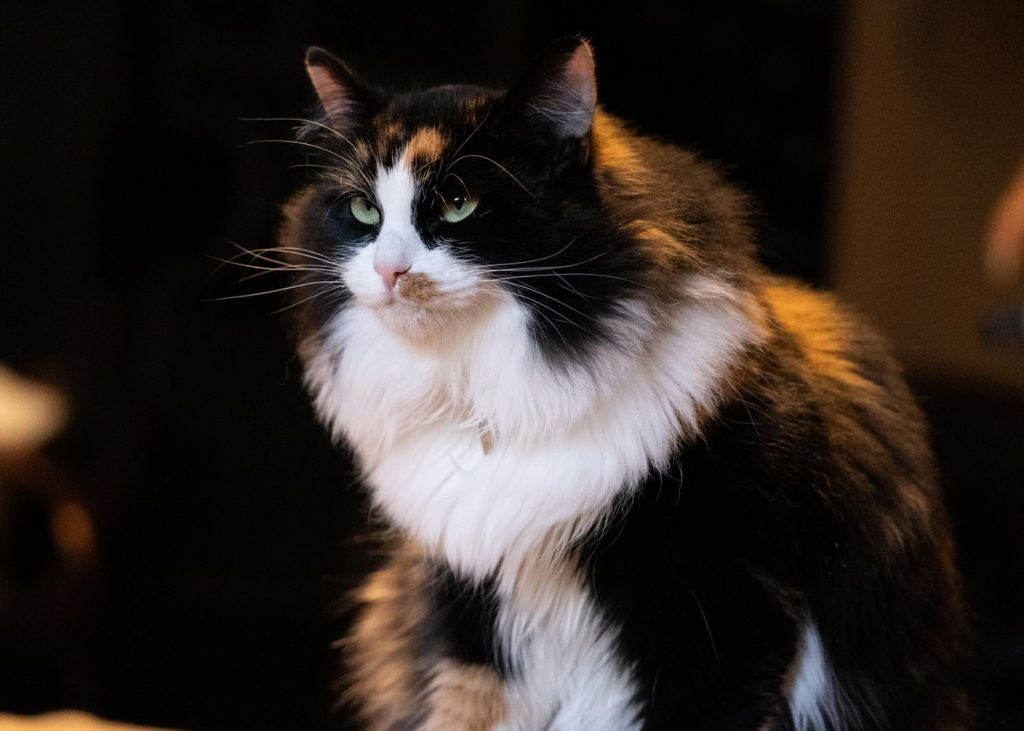 cat ate string a week ago