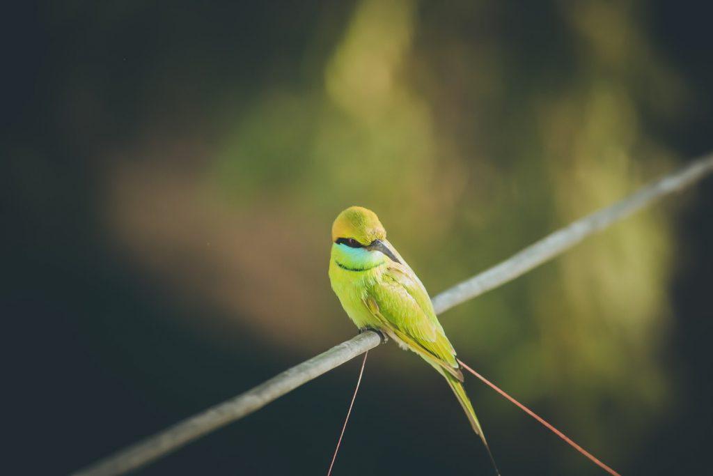 do birds get tired of standing