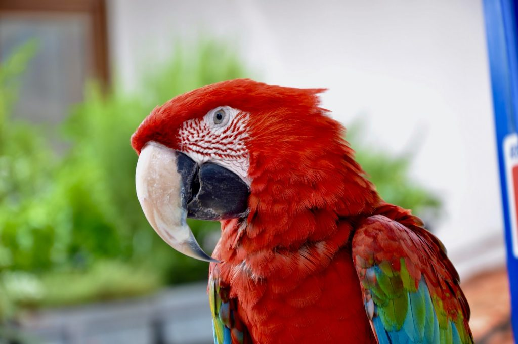 how much does it cost to trim a bird beak