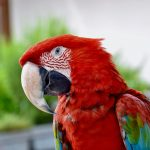 How Much Does It Cost To Trim A Bird Beak? (Answered!)