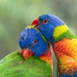 Do Birds Mate With Their Siblings? (Answered!)