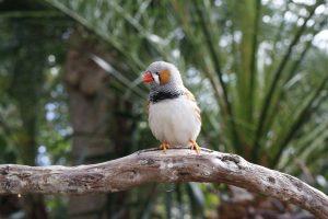 Can birds drink coffee