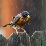 Can Birds Fly When Their Wings Are Wet? (Solved!)